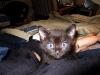 Demon Cat 1 5_3_11