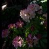 gardentour-07