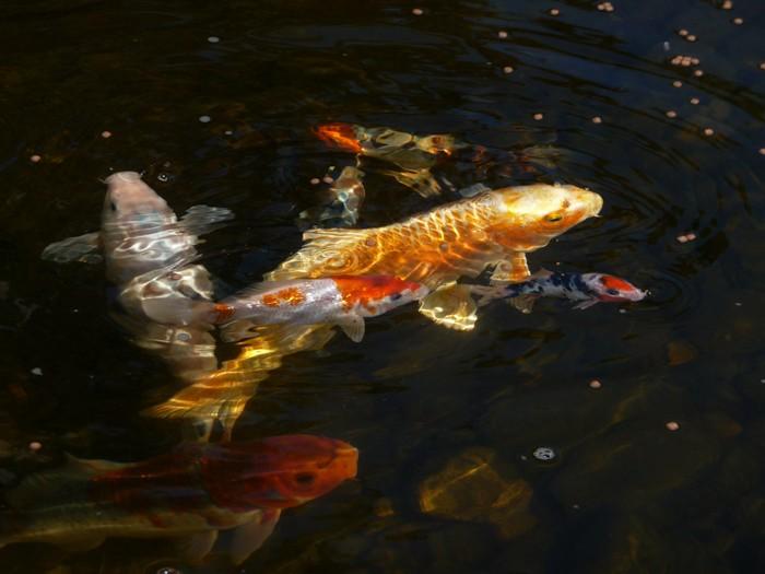 redheadfishes