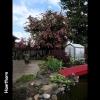 mayflowers07