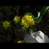 mayflowers10
