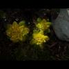 mayflowers11