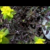mayflowers12