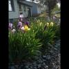 mayflowers19