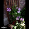 mayflowers20