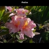 mayflowers22