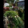 mayflowers24