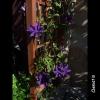 mayflowers29
