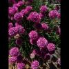 mayflowers32