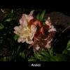 mayflowers40