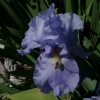 mayflowers42