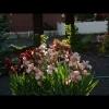mayflowers46