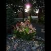 mayflowers47