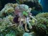 octopussmallwithspit