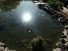 Sun on pond