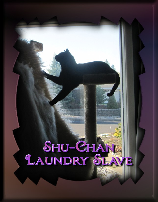 shu-chan-laundry-slave