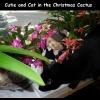 christmascactus