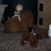 riding-teddies