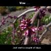 magnolia24