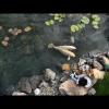 2boysand-fish2