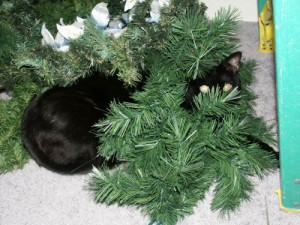 Efanor helps decorate.